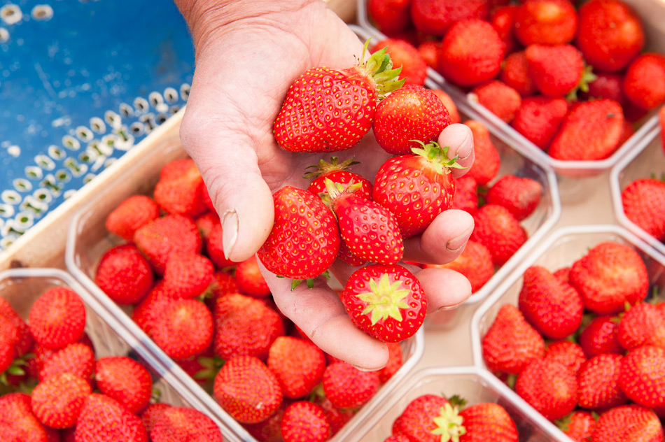 Fraises et fruits rouges du Velay