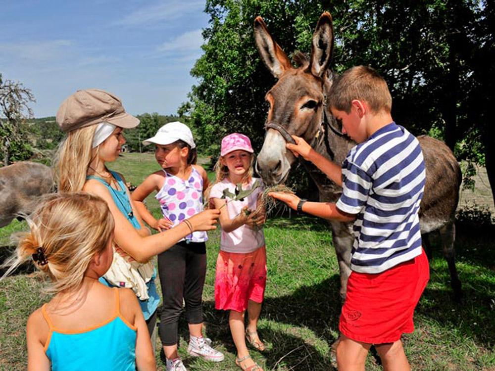 Donner à manger aux animaux avec les enfants